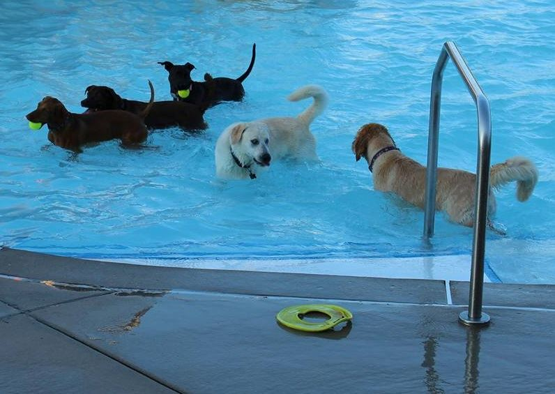 dogs swimming in riverchase outdoor pool